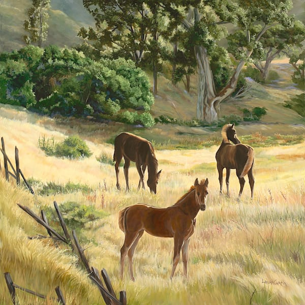 Three Foals In A Field Art | Fine Art New Mexico