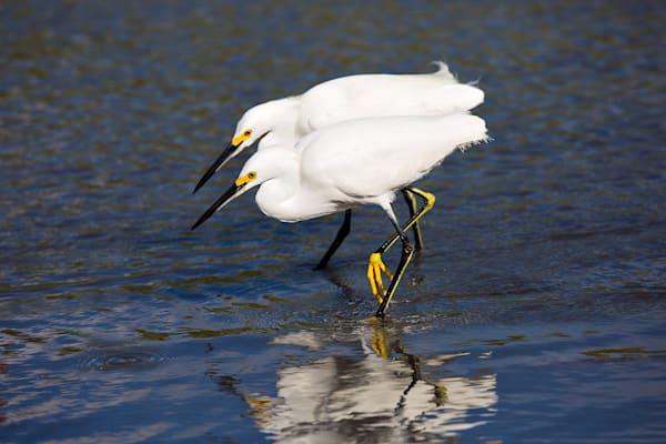 3300 Two Egrets  Art | Cunningham Gallery
