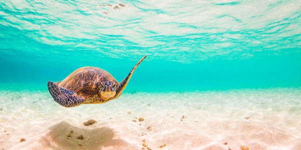 Underwater Hawaii Photography  |  Chill by Shane Myers