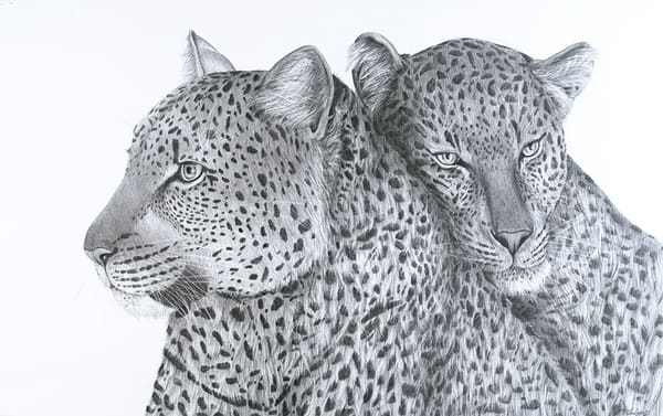Leopards in Love
