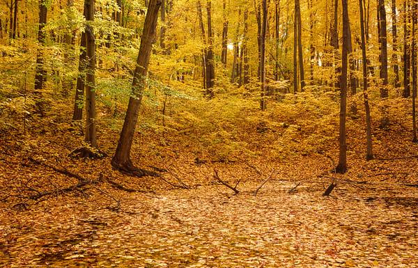 Autumn Peak