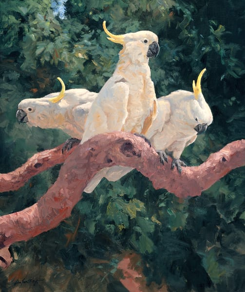 Cockatoos Three