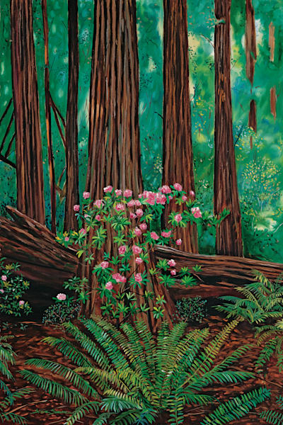 Redwoods and rhododendron in bloom