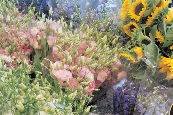 Fleur St Tropez