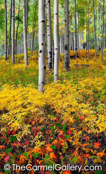 Brilliant Autumn