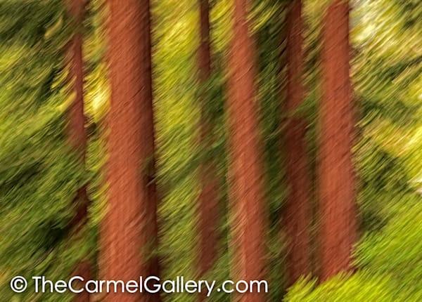 Redwood Grove II