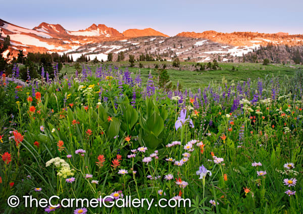 Colors of Summer, High Sierra