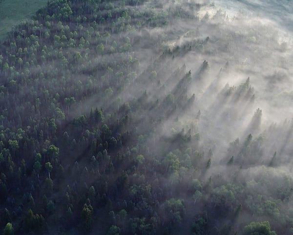 Valle Vidal Tree Mist