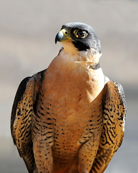 Peregrine Art | Fine Art New Mexico