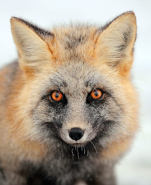 Red Fox Art | Fine Art New Mexico