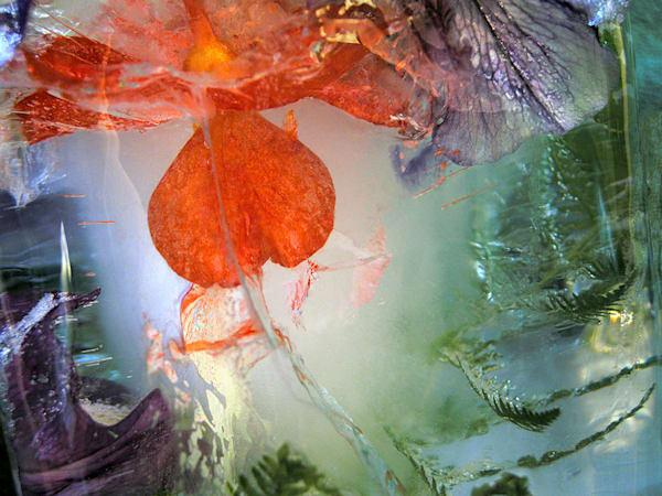 Icescape Geranium Art | Fine Art New Mexico