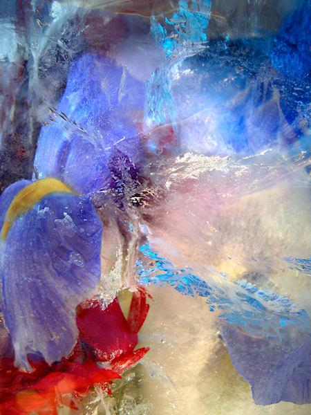 Ices Cape New Blue Iris Art | Fine Art New Mexico