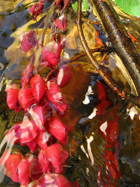 Swimming In Fuchsia Art | Fine Art New Mexico