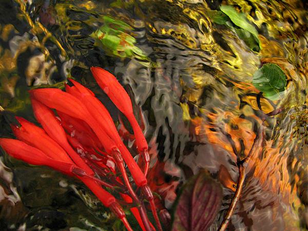 Shimmer Art | Fine Art New Mexico