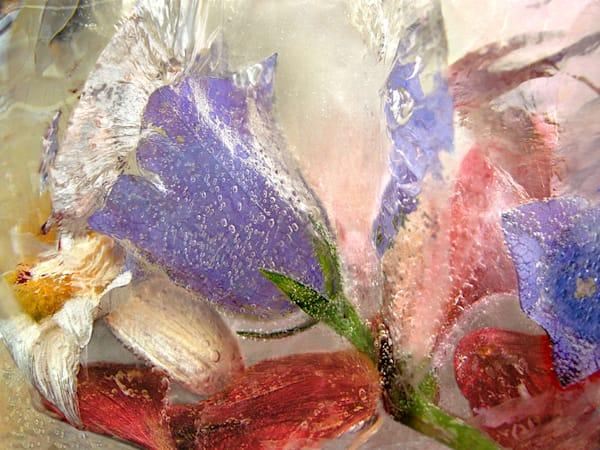 Icescape Campanula Art | Fine Art New Mexico