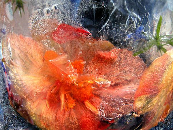 Icescape Mango Flame Skimmer Art | Fine Art New Mexico