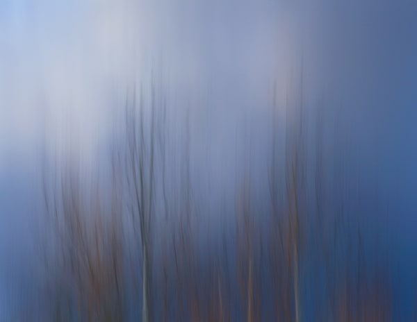 Blue Forest Art | Fine Art New Mexico