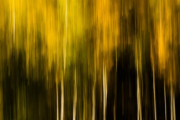 Aspens Of Fall 4 Art | Fine Art New Mexico