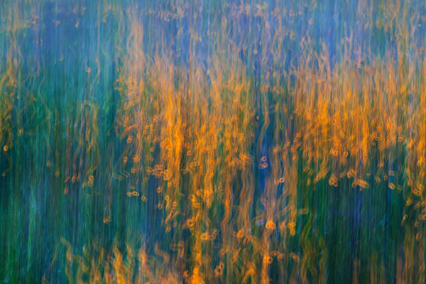 Flower Curtain Art | Fine Art New Mexico