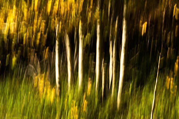 Aspens Of Fall 2 Art | Fine Art New Mexico