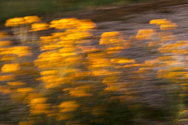Amazing Moment Of Flowers Fleeting Art | Fine Art New Mexico