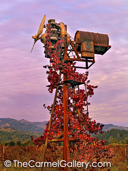 Climbing Vines, Napa Valley