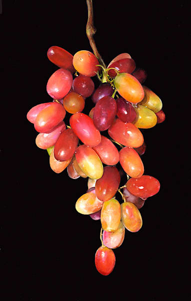 Hanging Table Grapes