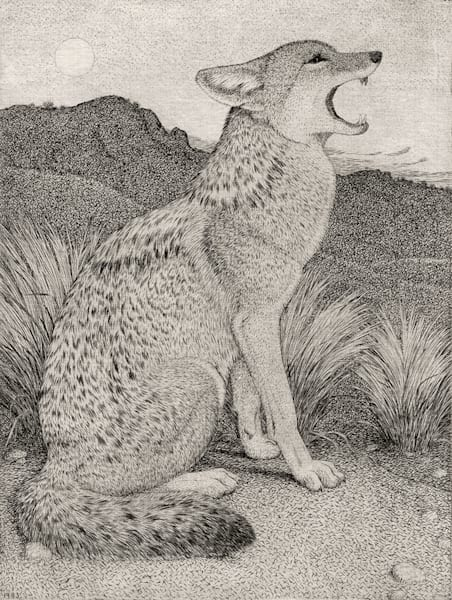 Coyote Howling Art | Fine Art New Mexico