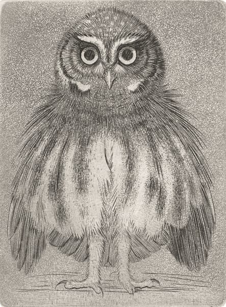 Elf Owl Art | Fine Art New Mexico