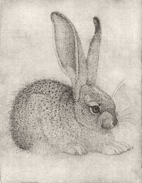 Rabbit   Durer Pose Art | Fine Art New Mexico