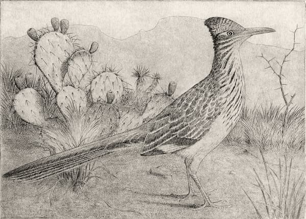 Roadrunner Art | Fine Art New Mexico
