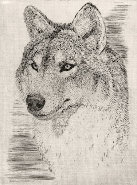 Wolf Head Art | Fine Art New Mexico
