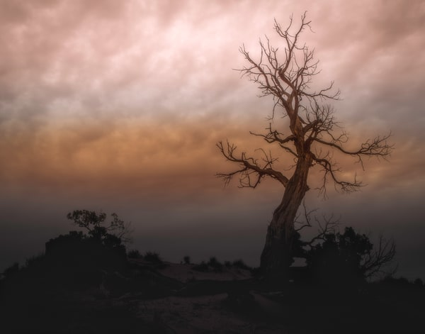Monument Tree Photography Art | JL Grief Fine Art Photography