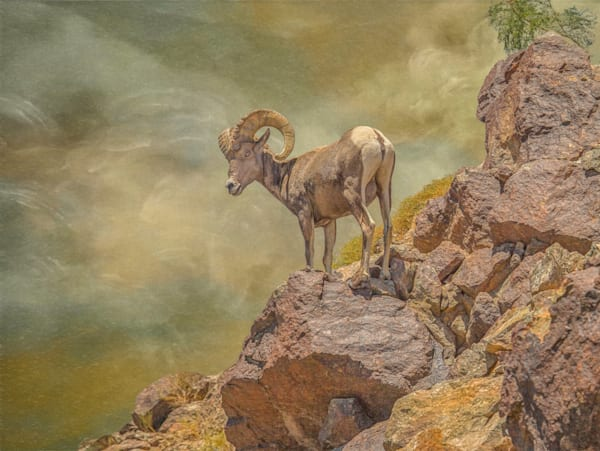 Browns Bighorn Photography Art | JL Grief Fine Art Photography