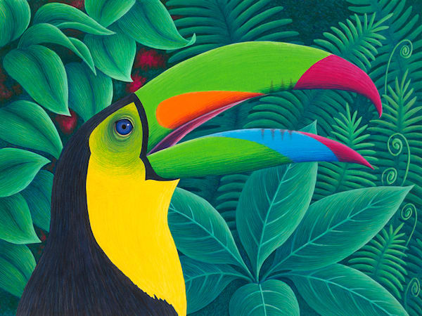 Tropical Toucan Art | Fine Art New Mexico