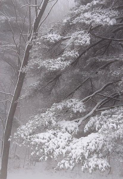 Dahlonega Snowfall