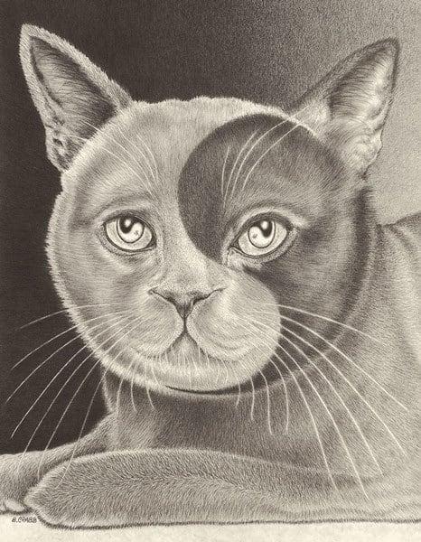 """""""Yin Yang Cat"""""""