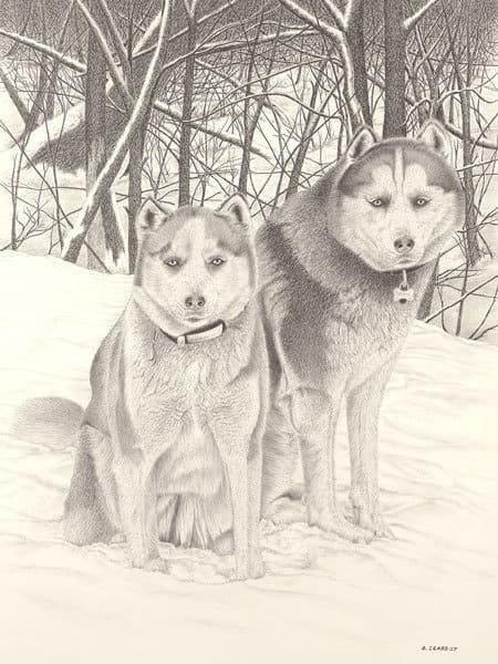 """Huskies"""
