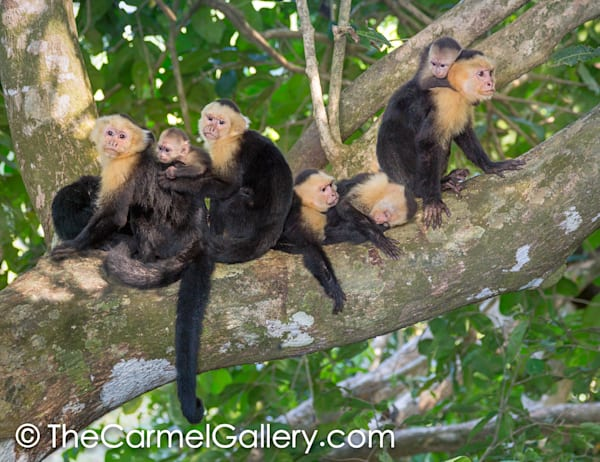 Rain Forest Monkey Family