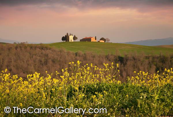 Mustard Bloom Tuscany