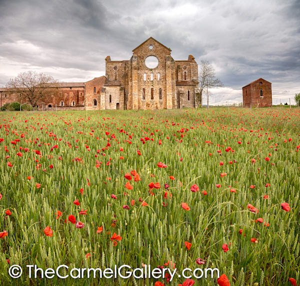 San Galgano Poppies