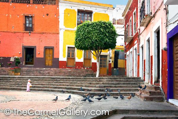 Pigeons, Guanajuato