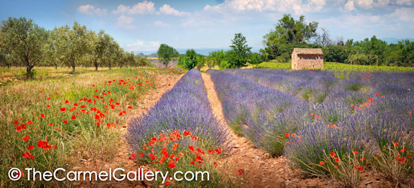 Flowered Fields Provence
