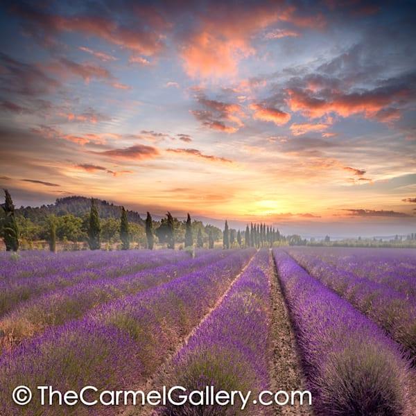 Lavender Sunrise Provence
