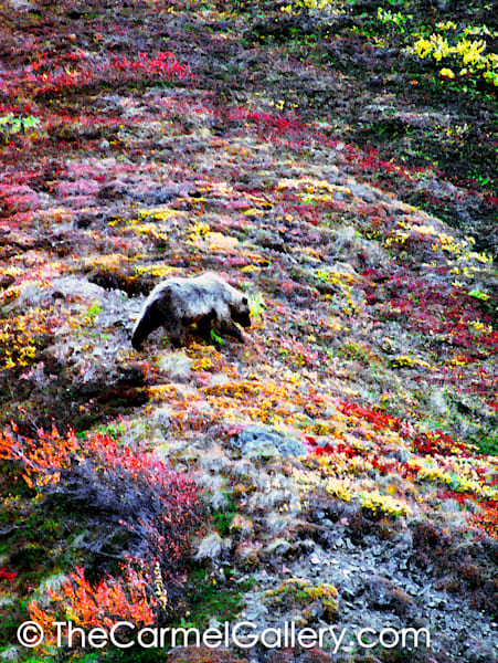 Grizzly Garden