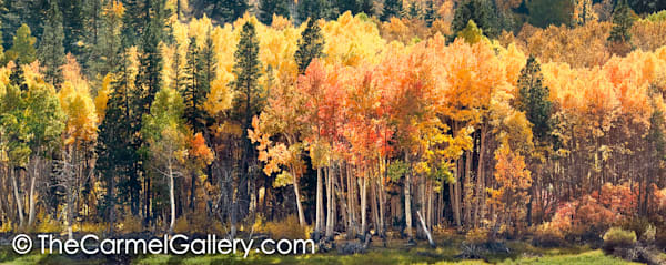 Lundy Canyon Autumn