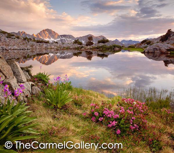 Midsummer High Sierra