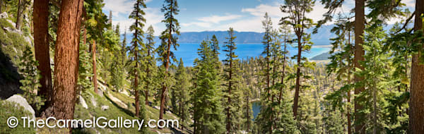 Tahoe Forest Panorama