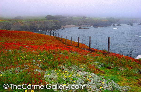 Spring Along the Sonoma Coast,psd