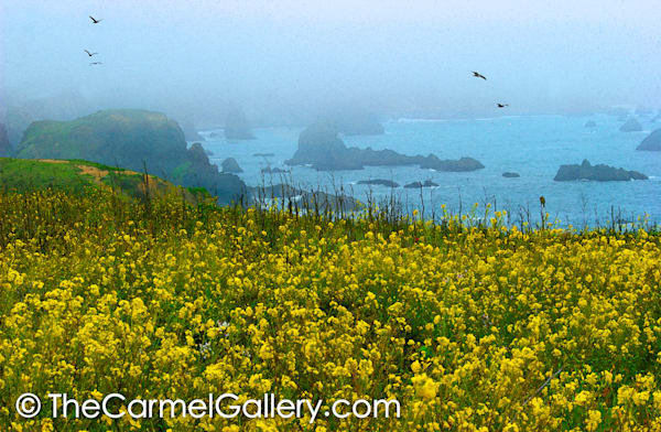Sonoma Coast in Bloom